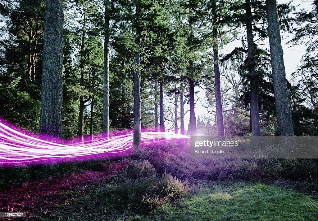 Light trails passing through woods.