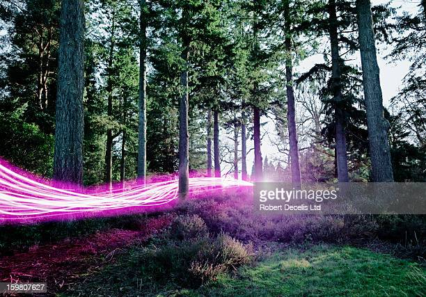 Light trails passing through woods.