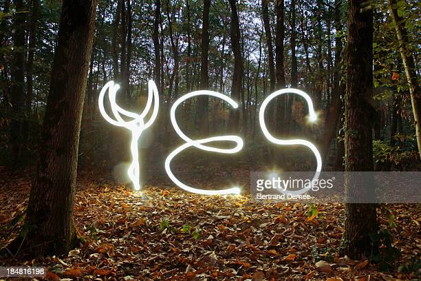 Light trails spelling 'Yes' on the forest