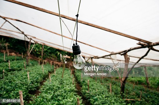 A lightbulb hangs in a covered area which is used to grow food : Stock Photo