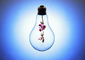 Lightbulb with orchid inside, blue background