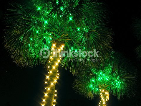 lighted palm palmetto trees tropical party christmas lights stock photo