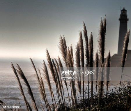 Lighthouse and Pampas Grass