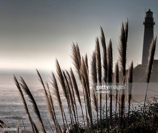 灯台とパンパス芝生