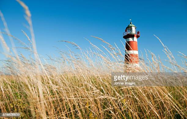 Lighthouse, grass on foreground