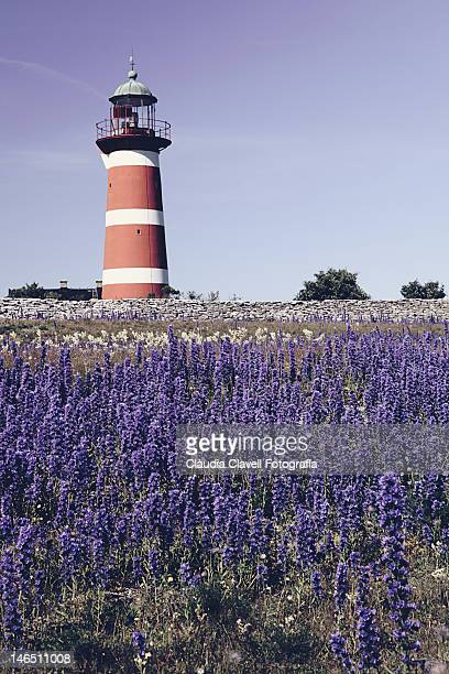 Lighthouse with purple flowers