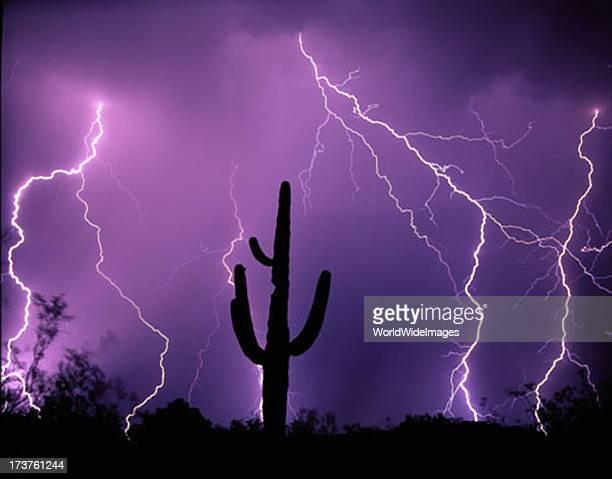 Lightning strikes over Saquaro Cacti