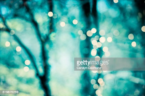 Lights Glowing In Trees With Teal Background Stock Photo ...