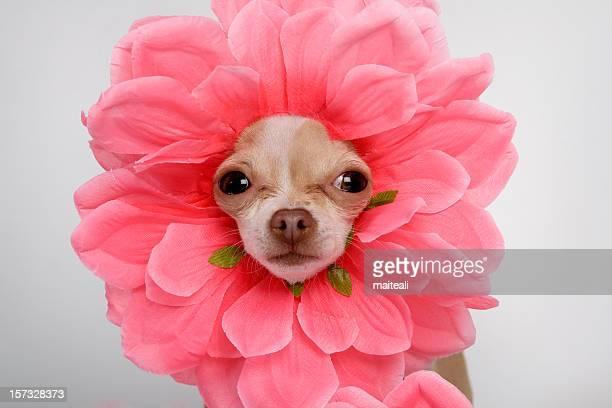 Wie eine Blume