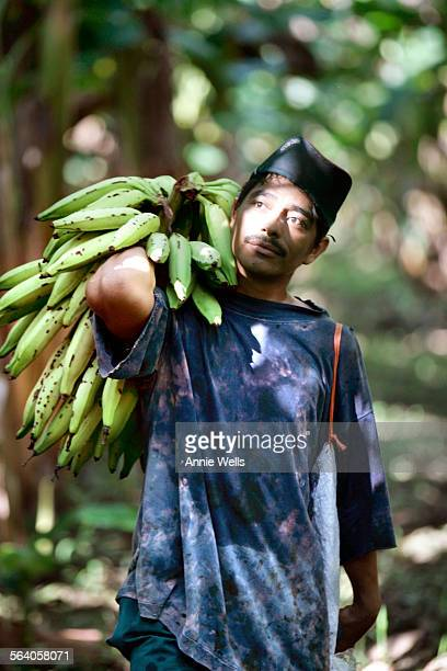 Like hundreds of laborers before him William Mu–oz Mercado carries his harvest of platanos through the plantation of San Pablo in Posoltega Nicaragua...