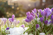 frühlingsblumen auf wiese bei sonnenaufgang