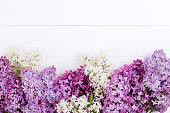 The purple and white lilac flowers on a white wooden background