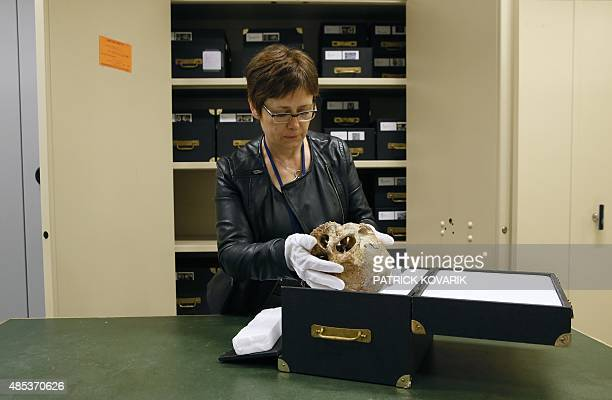 Liliana Huet collection manager of the Museum of Man puts the skull of the CroMagnon man back into a box at the archives of the museum on August 27...