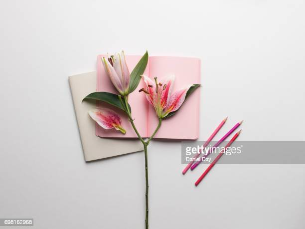 lilies displayed creatively  on top of an open pink notebook with pink coloured pencils on a white background