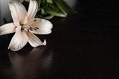 Lily flower on the dark background. Condolence card. Empty place for a text.