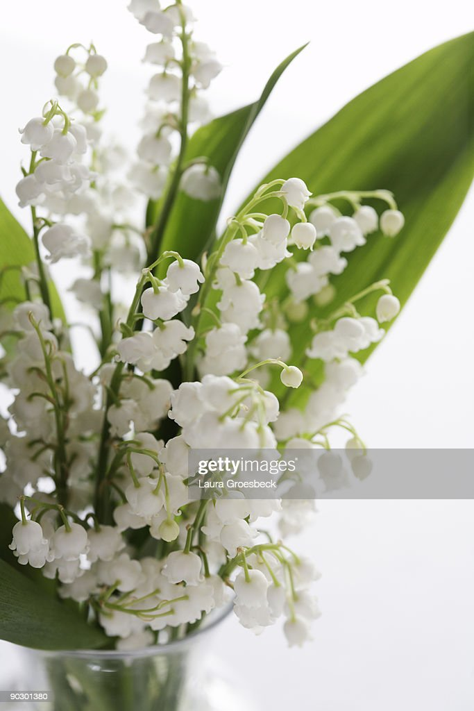 Lily of the Valley still life : Stock Photo