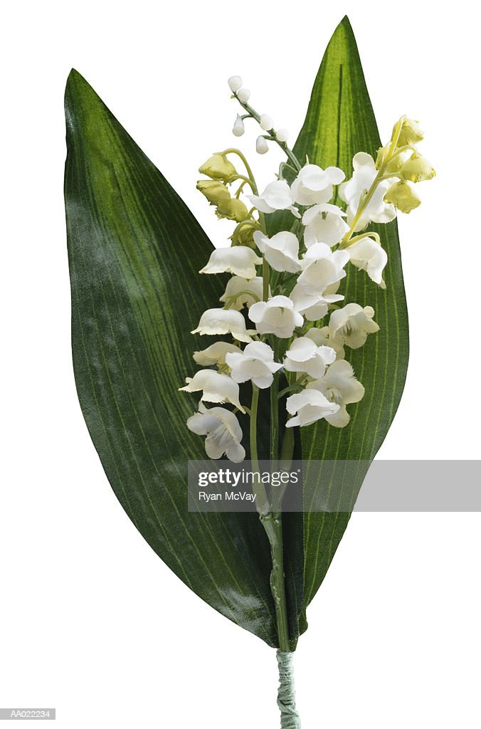 Lily-of-the-Valley imitation flower : Stock Photo