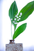 Lily-of-the-valley in vase