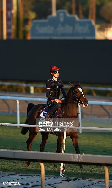 Limato exerecises during training for the Mile in the 2016 Breeders' Cup World Championships at Santa Anita Park on November 2 2016 in Arcadia...