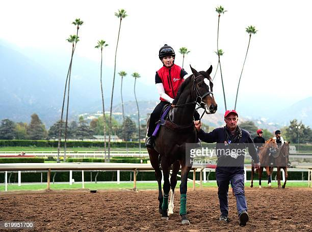 Limato is escorted off the track during training in the Mile for the 2016 Breeders' Cup World Championships at Santa Anita Park on November 1 2016 in...