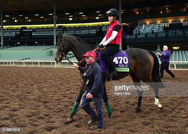 Limato is lead to the turf track during training in the Mile for the 2016 Breeders' Cup World Championships at Santa Anita Park on November 1 2016 in...