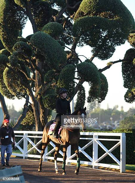 Limato on track for the Breeders' Cup Mile at the Santa Anita Race Track on November 2 2016 in Arcadia California
