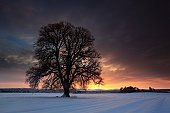 Lime tree snow drift field farm dawn light