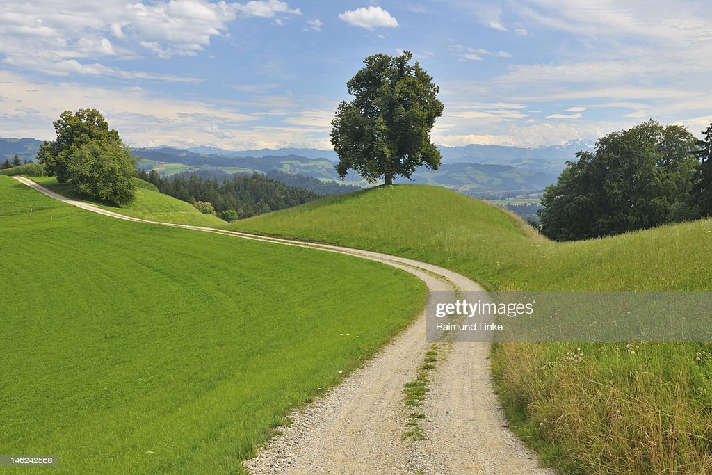 Lime Tree with Field Path : Stock Photo