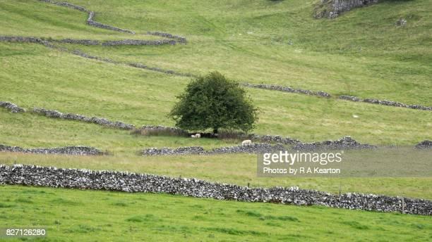 Limestone walls in the White Peak, Derbyshire, England