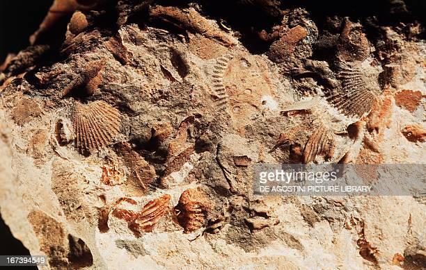 Limestone with fossilised imprints
