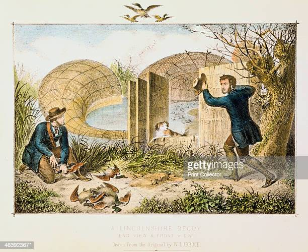 Lincolnshire Duck Decoy c1845 Front and end views of the netted tunnel Wild duck were decoyed into the mouth of the net covering a curving ditch or...