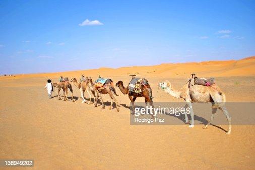 Line camel