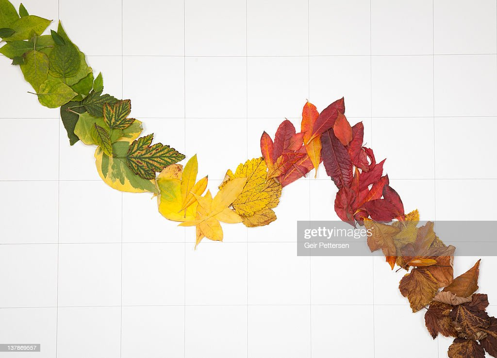 Line graph formed of 4 seasons leaves - stock photo