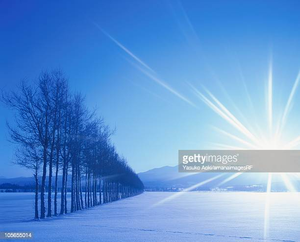 A Line of Bare Trees in a Snowy Field and the Sun Shining in the Sky. Hokkaido, Japan