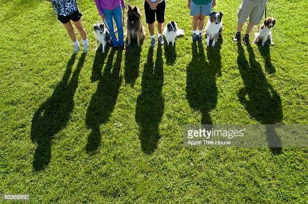 Line of dogs and owners casting shadow