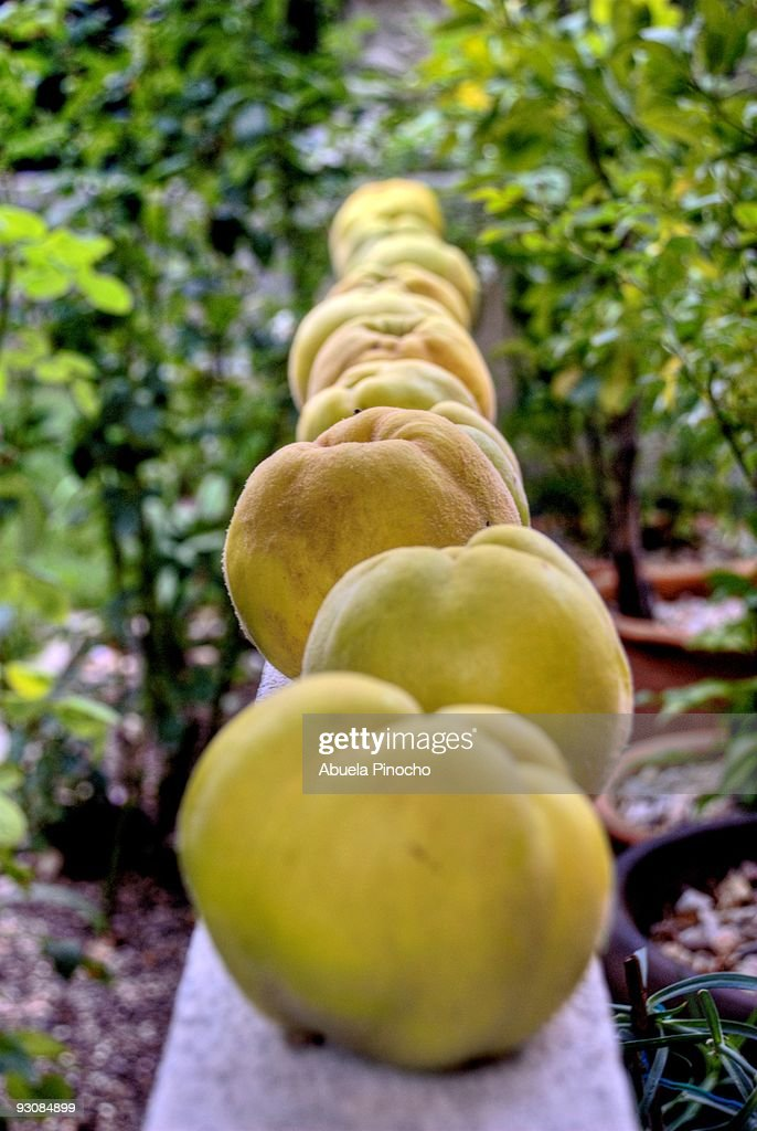 Line of Quince