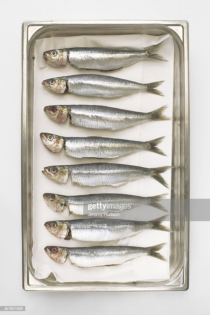 Line of Sardines in a Tin Can : Stock Photo