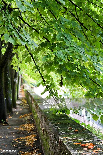 Line of trees and low wall with wet leaves
