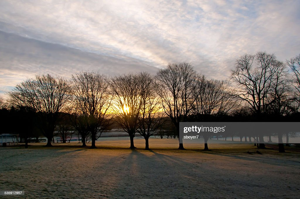 Line of Trees at Dawn : Stock Photo