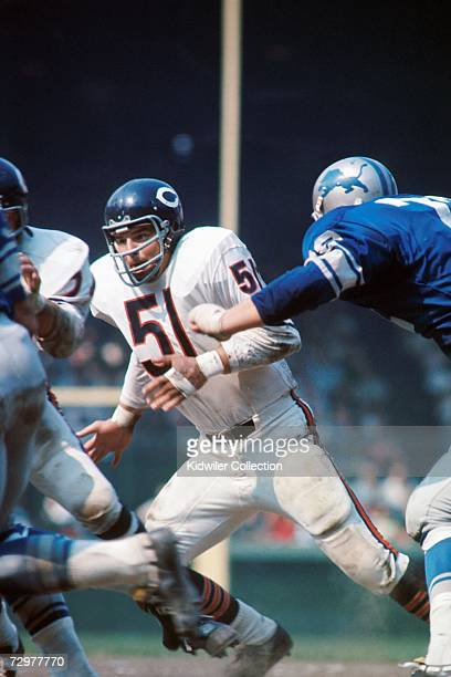 Linebacker Dick Butkus of the Chicago Bears during a game the 1960's against the Detroit Lions at Briggs Stadium in Detroit Michigan Butkus played...