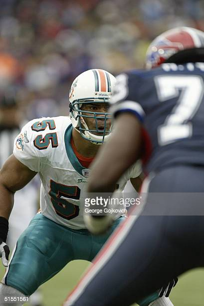 Linebacker Junior Seau of the Miami Dolphins in action against the Buffalo Bills on October 17 2004 at Ralph Wilson Stadium in Buffalo New York The...