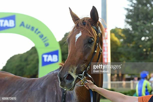 Linguist after winning Procon Developments Maiden Plate at Cranbourne Racecourse on December 30 2016 in Cranbourne Australia