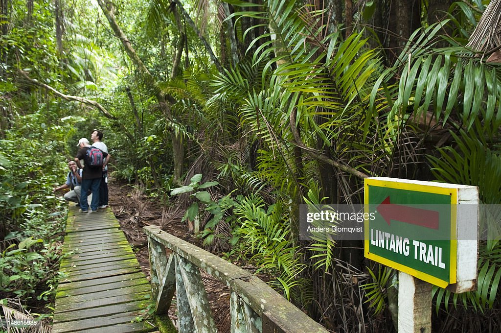 Lintang Trail and tourists on boardwalk.