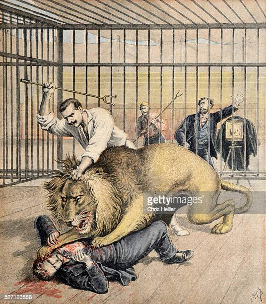 Lion Attack in Cage at the Menagerie Jardin d'Acclimatation Paris Zoo
