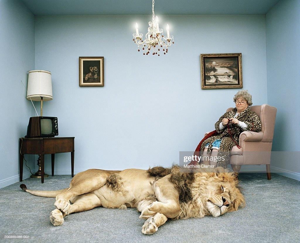 Lion lying on rug, mature woman knitting : Stock Photo