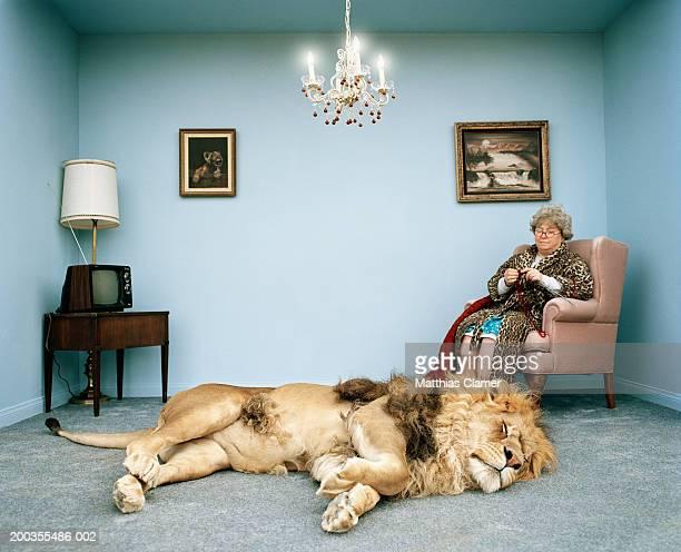 Lion lying on rug, mature woman knitting