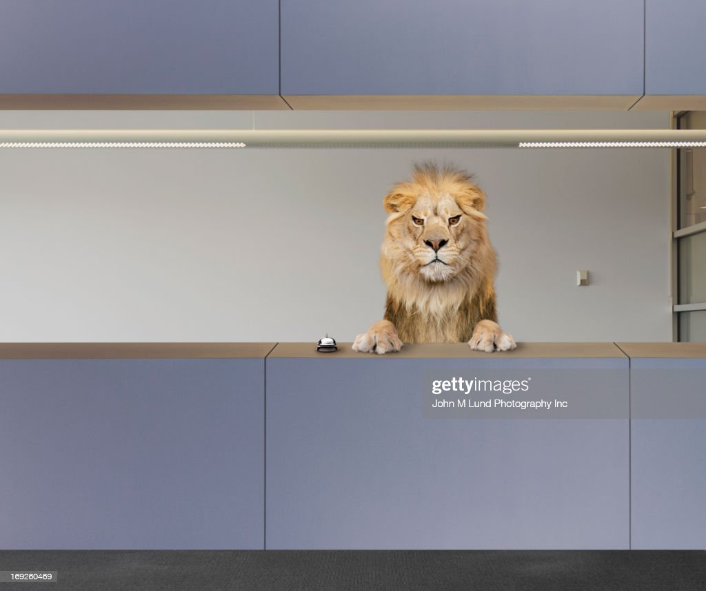 Lion sitting behind front desk