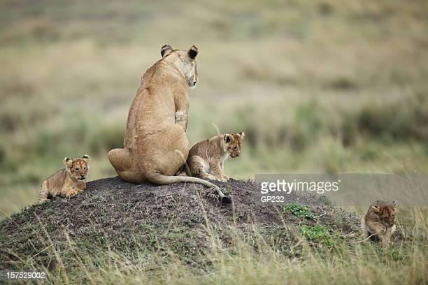 Leonessa e cubs