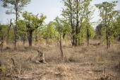 A lioness is pictured on November 18 2012 in Hwange National Park in Zimbabwe AFP PHOTO MARTIN BUREAU