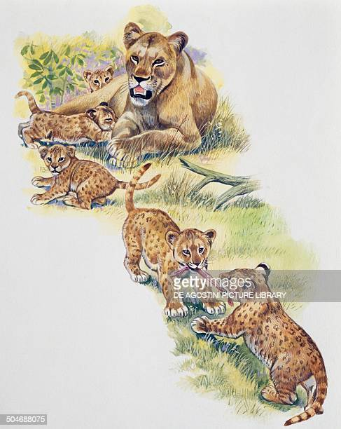 Lioness with her cubs Felidae drawing